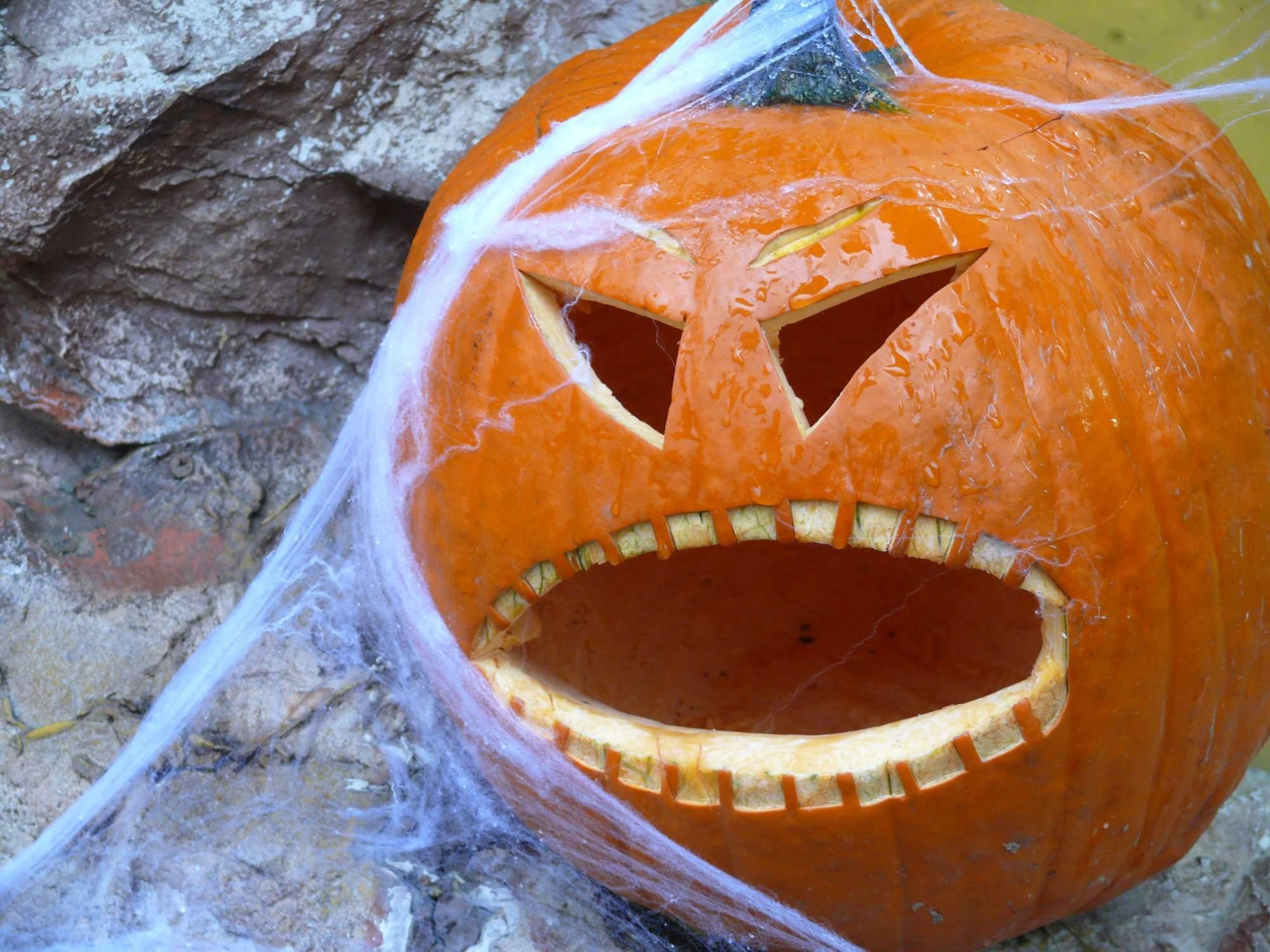 Halloween je v Zoo obľúbeným sviatkom. Foto: Kristína Marcinková