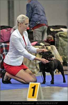 "Ursa – Stawka Wieksza Niž Žycie (Joli Kaf Du Domaine d´Ishtar X Extra´s Legacy Domidar Dogs) - Feny - mezitřída - známka: ""výborná 2, res. CAC"""