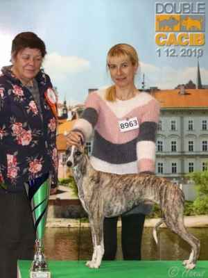 JOBELSA Lásky dar - DUO CACIB Praha, 1.12. 2019 - JBIG X.