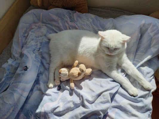 1.6.2021 - Mia měsíc v novém domově ... - Miunka je šťastná a moc hodná. Je miláček rodiny. Vnesla mezi nás více radosti. Jí vše co se jíst dá a mlsy také. Dodržujeme značky co nám napsala pani Lada. Je to opravdu moc hodná kočička, co víc jsem si mohla přát.