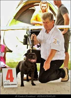 Kasia z Hambalek Bušín (Glimmer Man Domidar Dogs X Geddy z Hambalek Bušín) - Feny - třída otevřená - V4