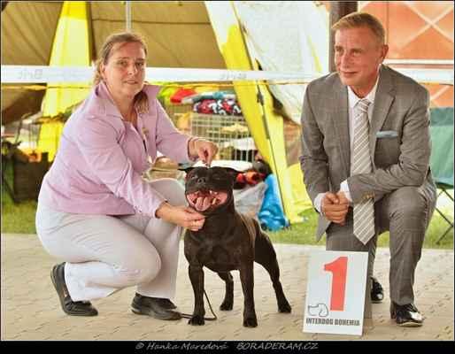 Glimmer Man Domidar Dogs (Breno Domidar Dogs X Maya Stawka Wieksza Niz Zycie) - BOB
