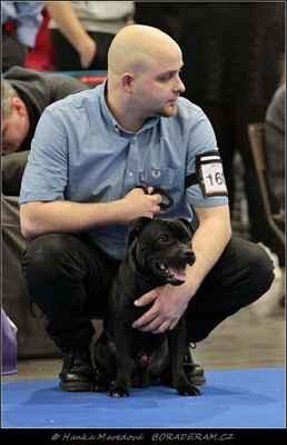 Amazing Hero Coffe-e-Staff (Great Gatsby Bullparraben X Dixie R.A.C. -Popelka) - Psi - dorost - VN 4