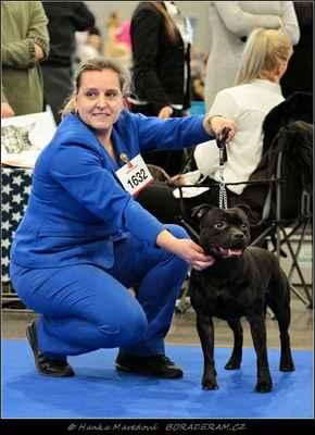 Kalashnikov Domidar Dogs (Glimmer Man Domidar Dogs X Grinning Devils Domidar go Ballistic) - Psi - mezitřída - V1, CAC CACIB
