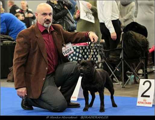 Alby Vecchio Gentle Bull (Because I´m Happy Terrystaff X Desert Rose Canea Bulls) - Psi - mezitřída - V2, res. CAC