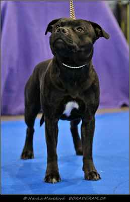 Keep Up With Domidar Dogs (Glimmer Man Domidar Dogs X Grinning Devils Domidar go Ballistic) - Psi - třída otevřená - V1, CAC