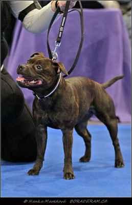 Ebbi Fantastic Fay Bohutín (Forever First Domidar Dogs X Athena Domidar Dogs) - Feny - mezitřída - VD