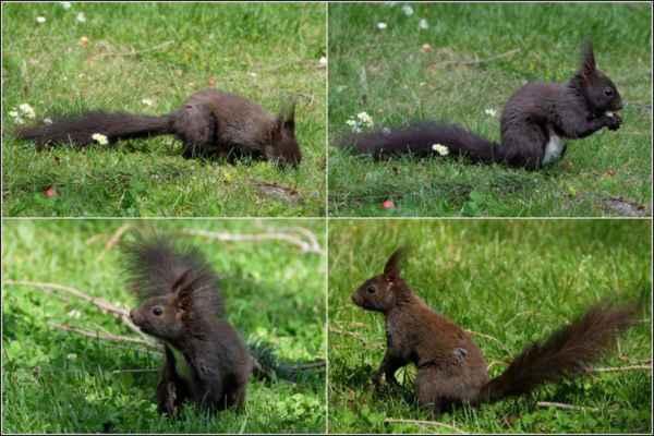 Po dalším hledání, kdy si nás vůbec nevšímala, našla ještě malý kousek a pak odběhla na zahradu.