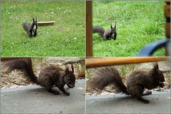 Další den už jenom zběžně prohlédla krmítko a zamířila k verandě.