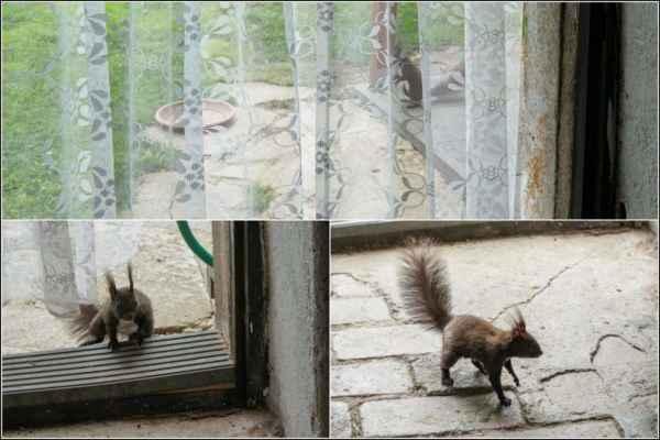 Zkusím najít tu tašku s ořechy.