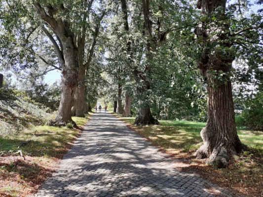 Díky své výjimečnosti patří toto stromořadí mezi chráněné památné stromy České republiky.