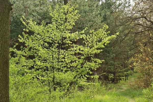 Les začátkem května - spodní a střední patro už zelené