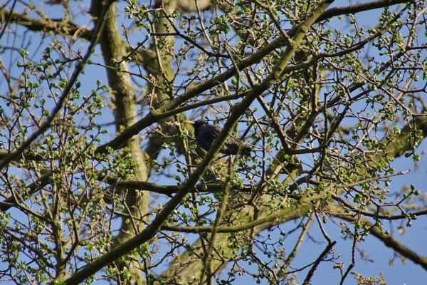 Ptáček zpěváček - myslím, že špaček