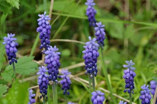 Modrá 1 - Semtam se i v divočině najdou modřence