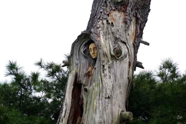 Stromová panna - Stále mne fascinuje, kdo si dal tu práci a vysoko do pukliny vsadil obličej