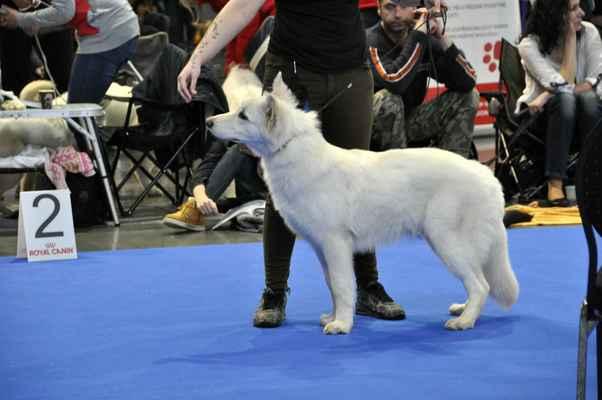 Boss Moravia Snow Flake - Male Puppy class