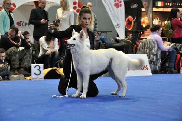 Chara Jasmine Whiteline Czech - Female Puppy class