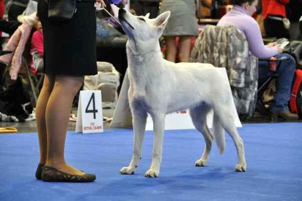 Niagara Nubika - Female Puppy class