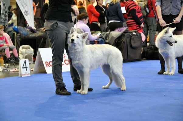 Rassey Star z Ranče Montara - Female Puppy class