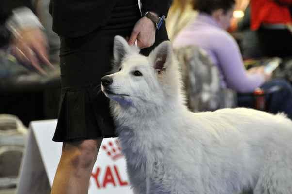 Vendetta od Bijelih Andjela - Female Puppy class