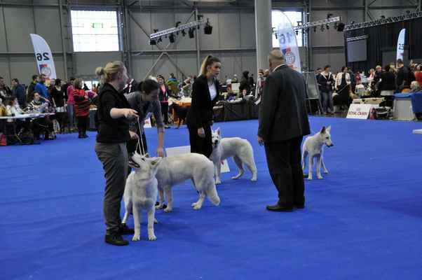 Rassey a Ryan Star z Ranče Montara, Chara Jasmine Whiteline Czech a Niagara Nubika - Female Puppy class