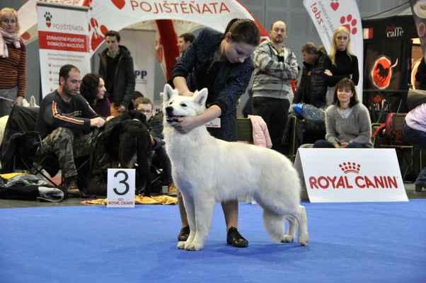 Queen Star z Ranče Montara - Female Junior class