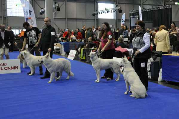Amber Nika-Ho, Diamond White Alaska Dancing With Wolves, Faira Areza Danel Sogno a Heralgina Pett´s Wolf - Female Intermediate class