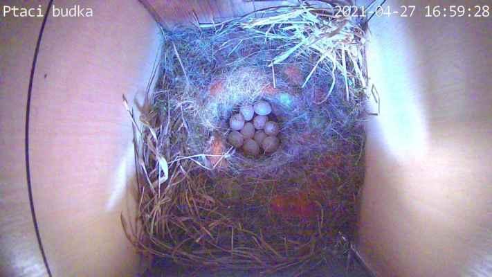 To jsem zvědav kolik se jich vylíhne a kolik nakonec vyletí mladých z hnízda.